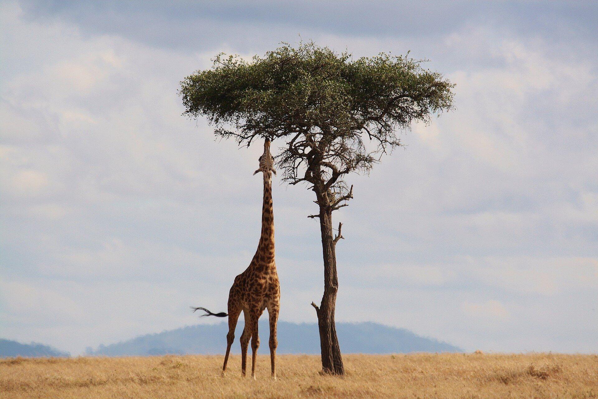 letture africa